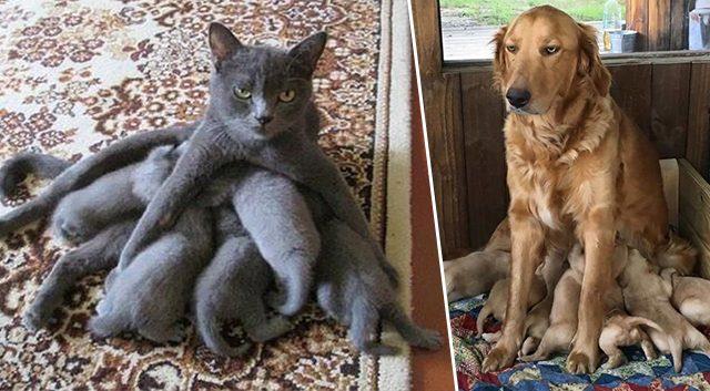 Этих животных материнство не обошло стороной. Очень милое зрелище…