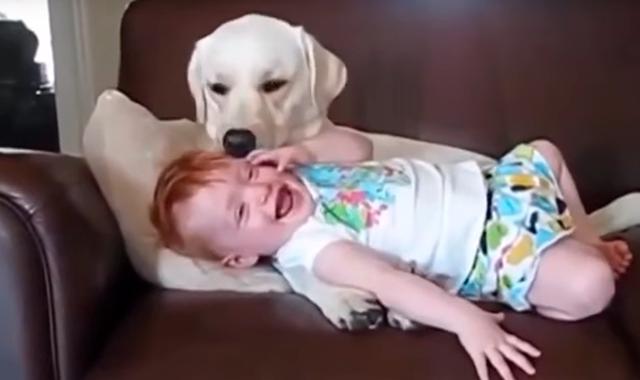 Вот что бывает, если оставить собаку наедине с ребёнком…