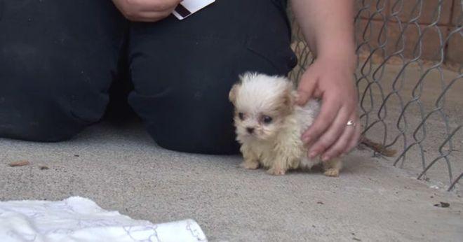 Милота этого видео просто достигла предела. Котёнок и щенок, брошенные людьми когда-то давно, подружились!