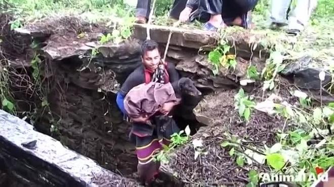 Пёс начал плакать от осознания того, что его всё-таки спасли и не оставили в беде…