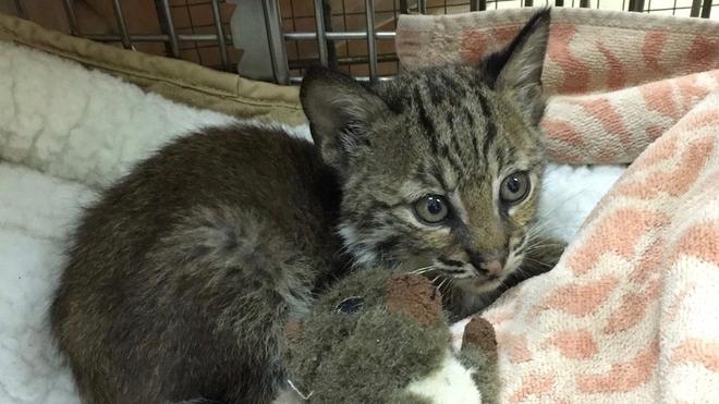 Он был просто беспризорным котёнком, которого спасли на шоссе. Но он оказался не тем, кем казался на первый взгляд…
