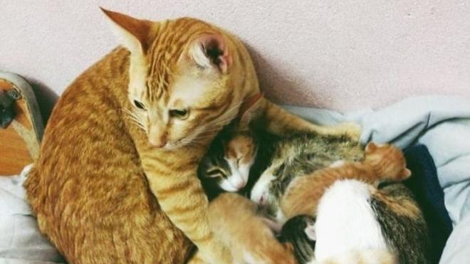 Этот кот поддержал свою кошку прямо во время родов. Миллионы сердец были покорены его поступком…