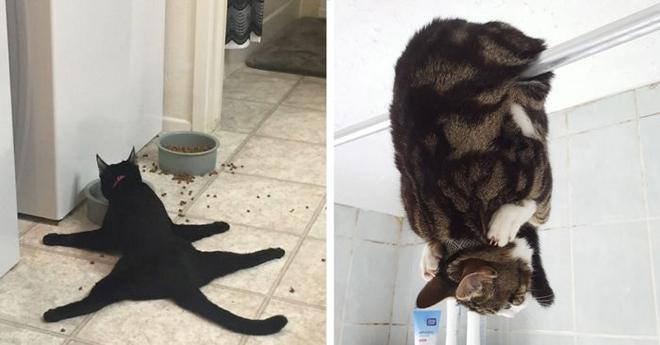 Эти коты ведут себя невероятно странно. Самые несносные домашние животные…