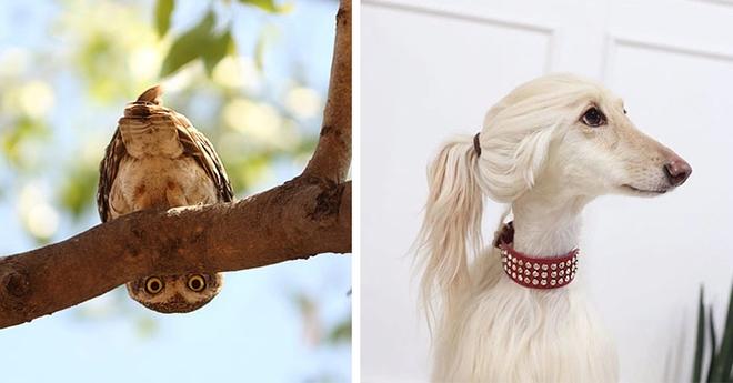20 очень милых животных, которые точно зарядят вас позитивом…