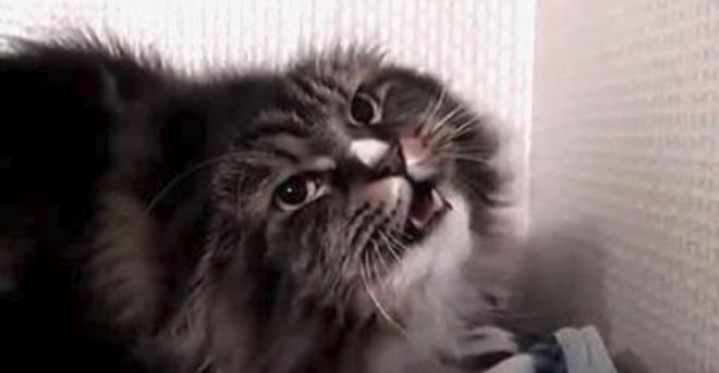 Он сказал всего одну фразу, и кот просто взорвал сеть. Талантище!