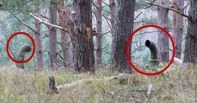 Парни просто бродили по лесу, как вдруг наткнулись на эти трубы. Они и представить не могли, что окажется под ними…