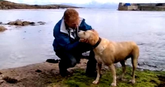 Ежедневно пёс идёт на берег этого океана, а там… а там его уже ждёт верный друг!