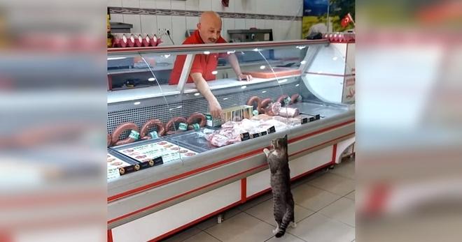 Каждый божий день этот кот навещает эту мясную лавку. Взгляните, что происходит далее…