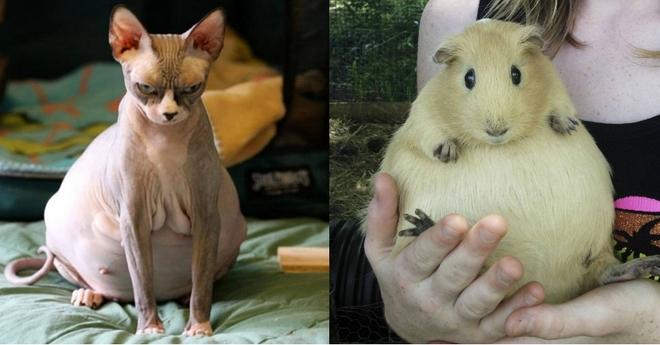 А вы видели, как выглядят беременные животные? Разные виды, и все такие милые!