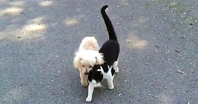 Кошечка решила помочь своему слепому другу пёсику найти дорогу домой. Трогательный момент…