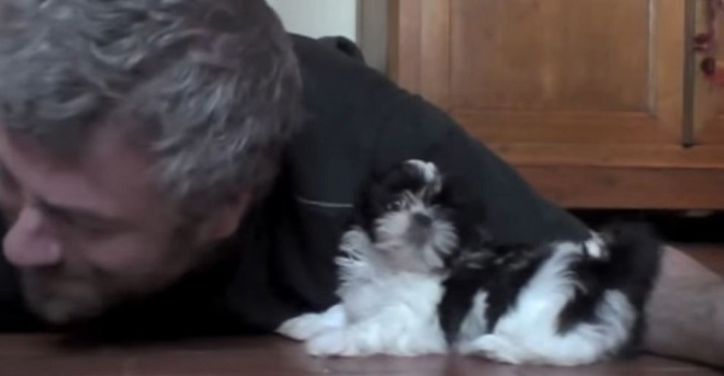 Если бы счастье было собакой, то оно точно выглядело так